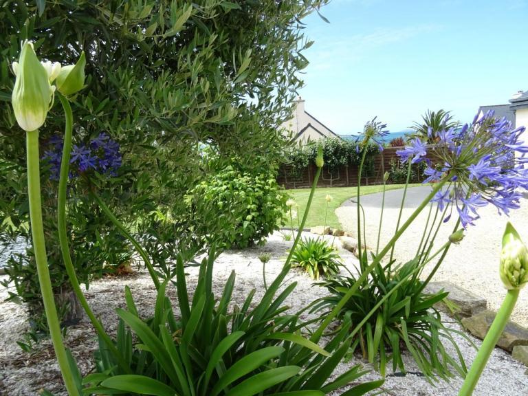 agapanthes blanches et bleues