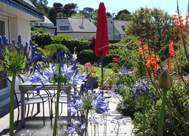 bouquet d'agapanthes au niveau de la terrasse