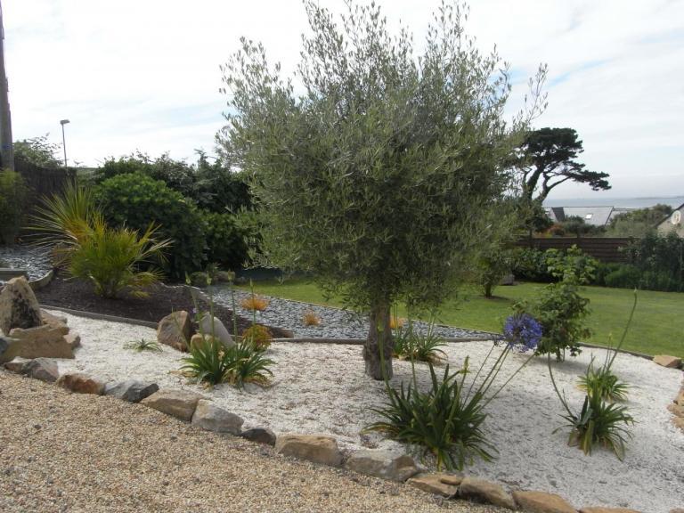 Les Agapanthes: olivier et agapanthes